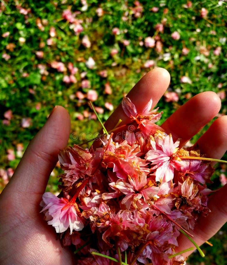 Blumen in der Hand lizenzfreies stockfoto
