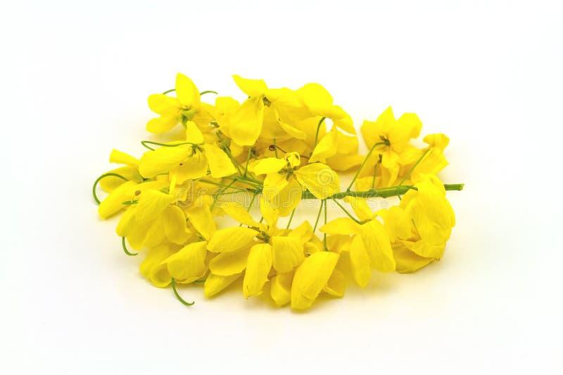 Blumen der Kassiefistel oder goldene Dusche, nationaler Baum von Tha lizenzfreie stockfotos