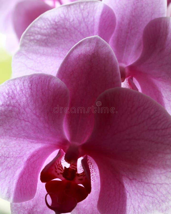 Blumen der Liebe lizenzfreies stockfoto