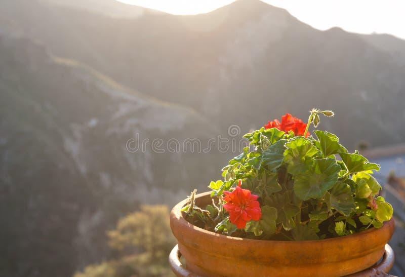 Blumen in der Terrakottaschüssel bei Sonnenuntergang stockfotografie