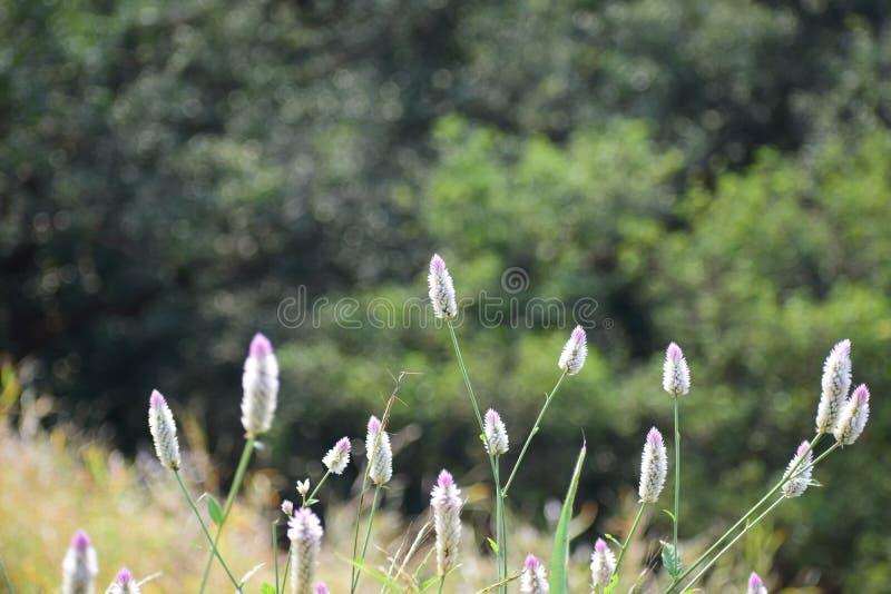 Blumen des Morgens lizenzfreie stockfotos