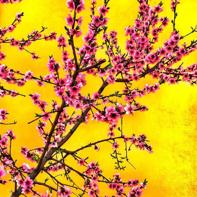 Blumen des Pfirsiches im Garten lizenzfreies stockfoto