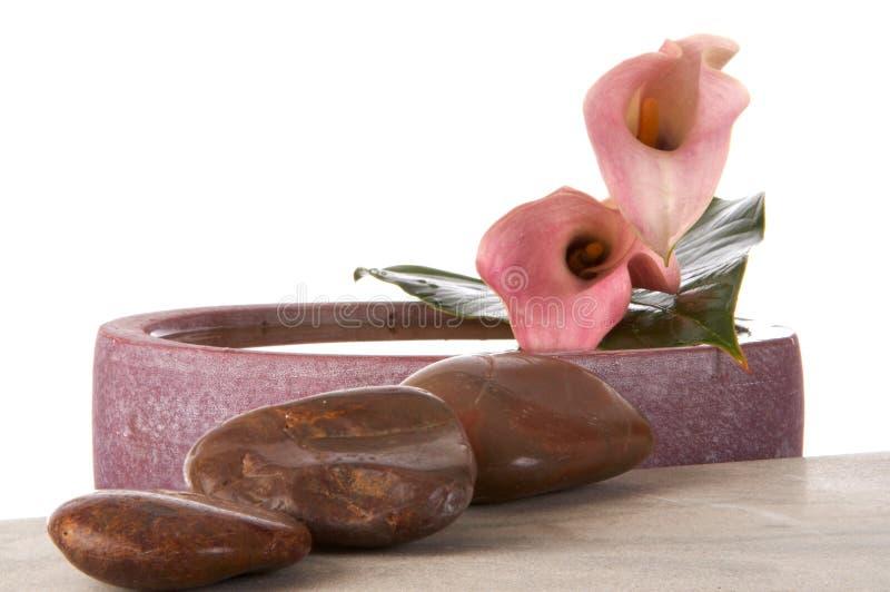 Blumen des rosafarbenen Calla stockfotografie