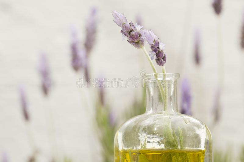 Blumen des wesentlichen Schmieröls und des Lavendels stockbild
