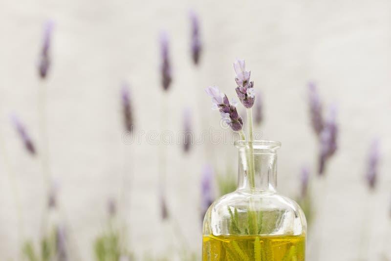 Blumen des wesentlichen Schmieröls und des Lavendels stockbilder