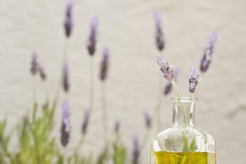 Blumen des wesentlichen Schmieröls und des Lavendels lizenzfreie stockbilder