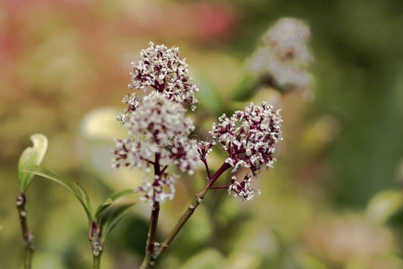 Blumen Details des Parks Anlagen mit Augenmakrolinse stockfotografie
