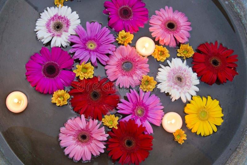 Blumen, die in das Wasser, voll von den Farben und von der Schönheit schwimmen stockfoto
