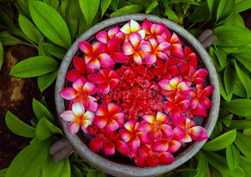 Blumen, die in ein Glas in Luang Prabang, Laos schwimmen stockbild