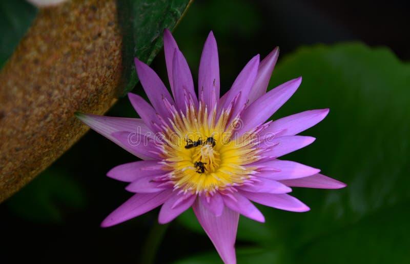 Blumen, die im Garten blühen stockbilder