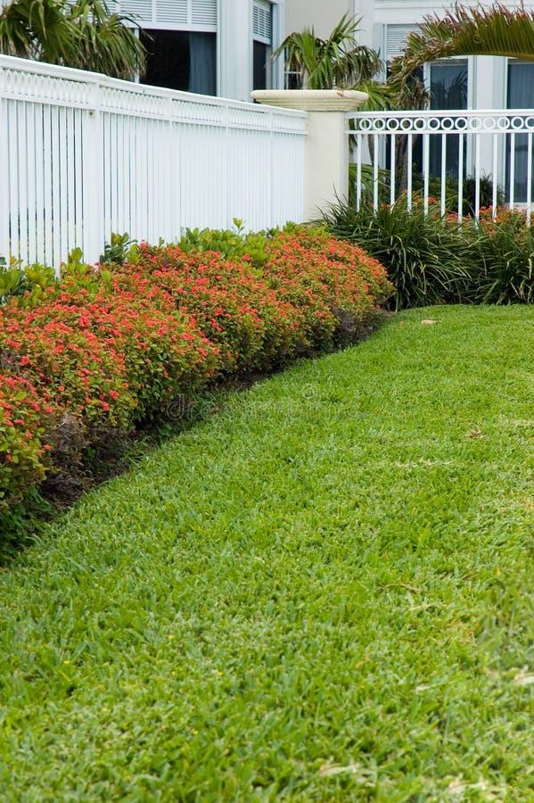 Blumen durch den weißen Zaun stockfotografie