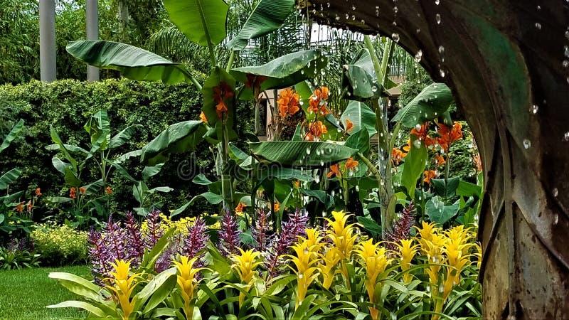 Blumen durch die Tröpfchen stockfotos