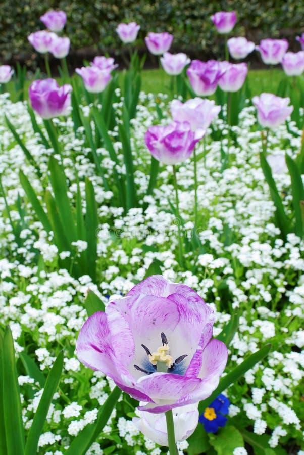Blumen in einem botanischen Garten lizenzfreie stockfotos