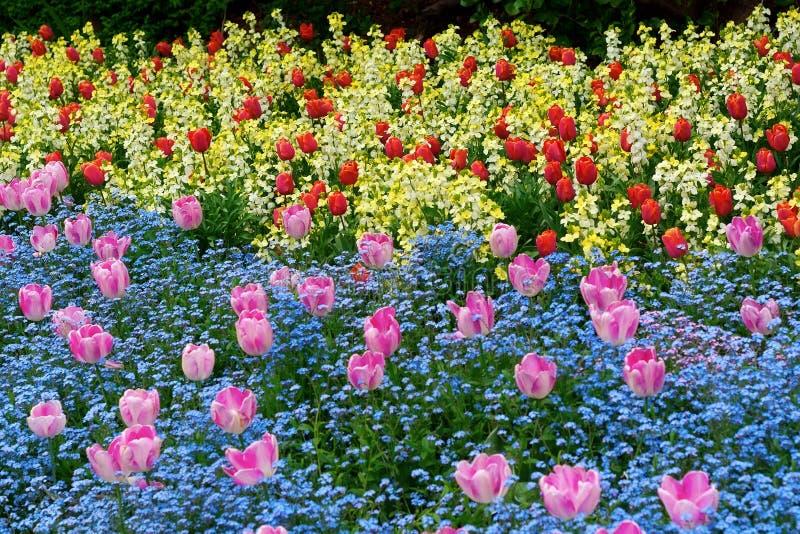Blumen in einem botanischen Garten stockbilder