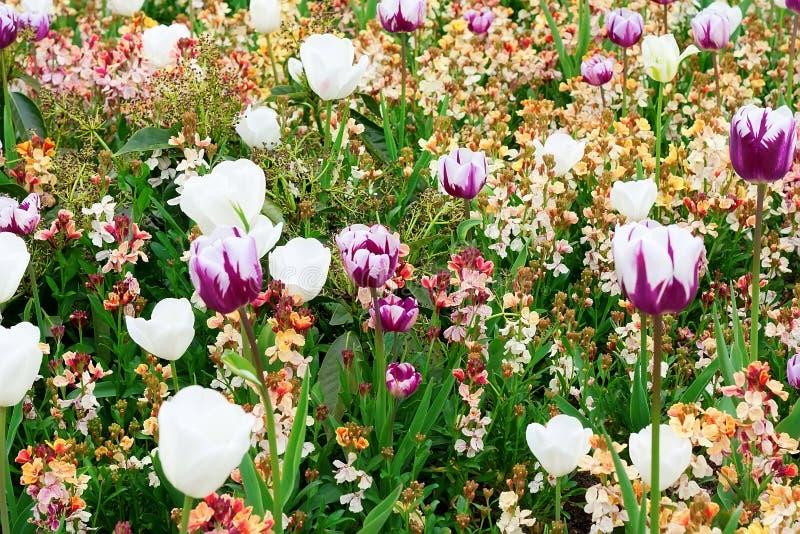 Blumen in einem botanischen Garten stockfotografie