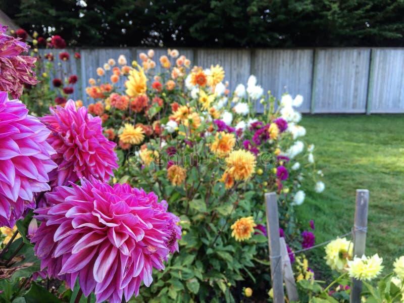 Blumen in einem Garten lizenzfreies stockfoto