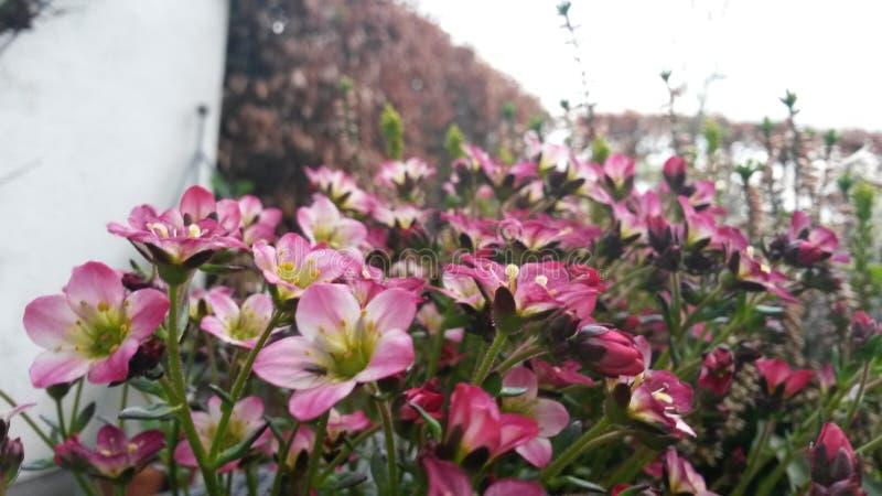 Blumen in einem Garten stockbild