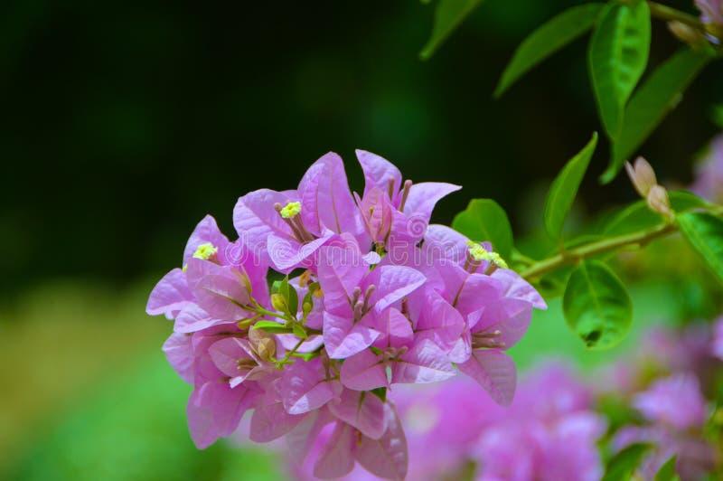 Blumen in einem Garten stockbilder