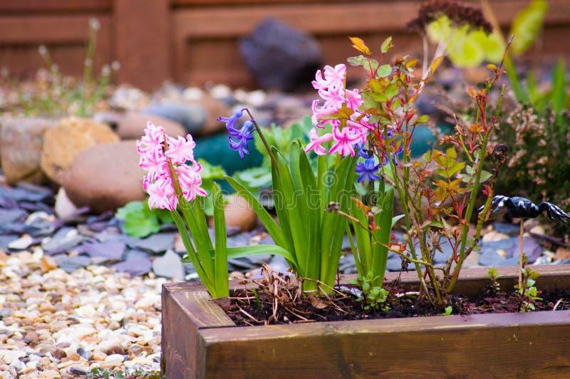 Blumen in einem Potenziometer stockbilder