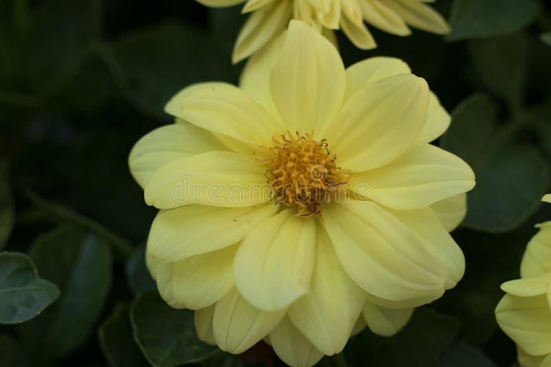 Blumen in einem spanischen Garten lizenzfreie stockfotos
