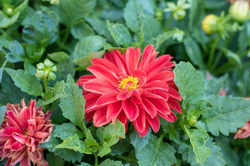 Blumen in einem spanischen Garten stockbild
