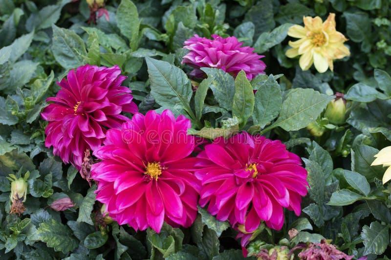 Blumen in einem spanischen Garten lizenzfreies stockbild