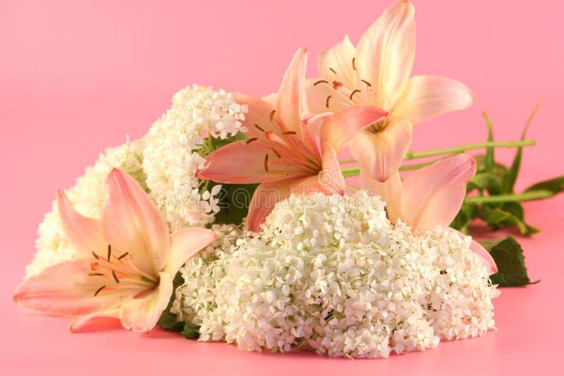 Blumen einer rosafarbenen Lilie lizenzfreie stockfotografie