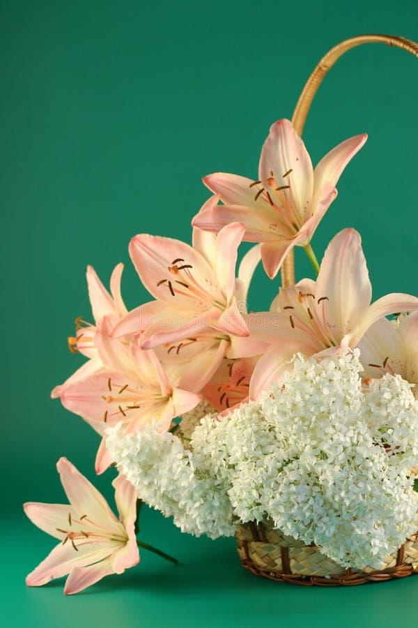 Blumen einer rosafarbenen Lilie lizenzfreies stockfoto