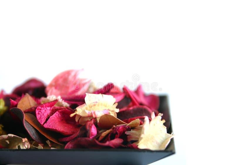 Blumen in einer Schüssel stockbilder