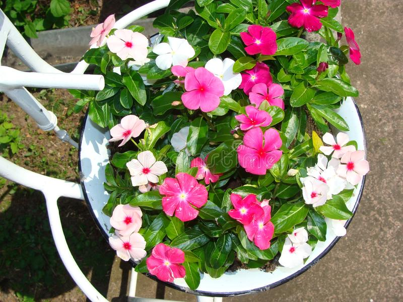 Blumen in einer Weinlesewaschschüssel stockfotos