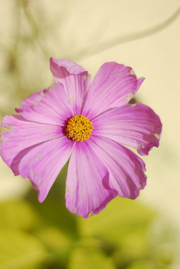 Blumen-Einfachheit - aus nächster Nähe lizenzfreie stockbilder