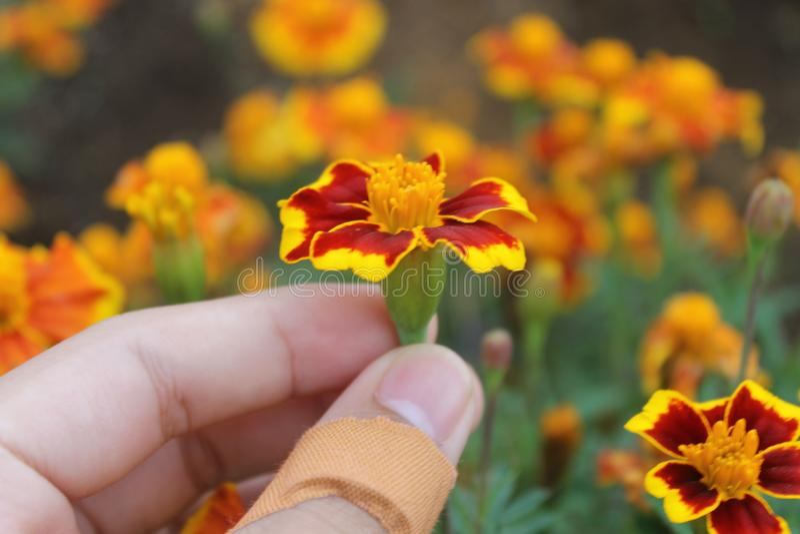 Blumen-Energie lizenzfreie stockbilder