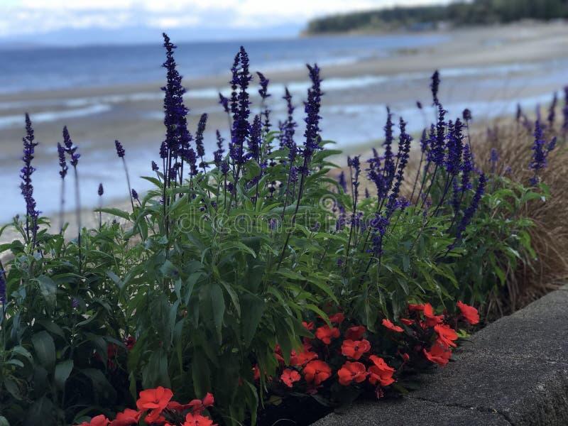 Blumen entlang der Qualicum-Strand-Promenade stockfoto