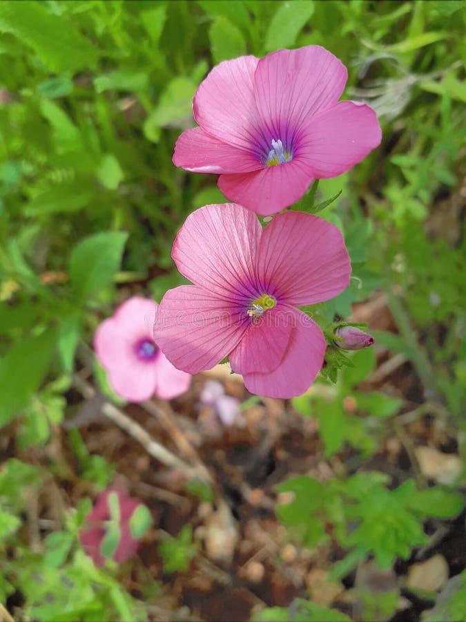 Blumen entspringen Weg stockbild
