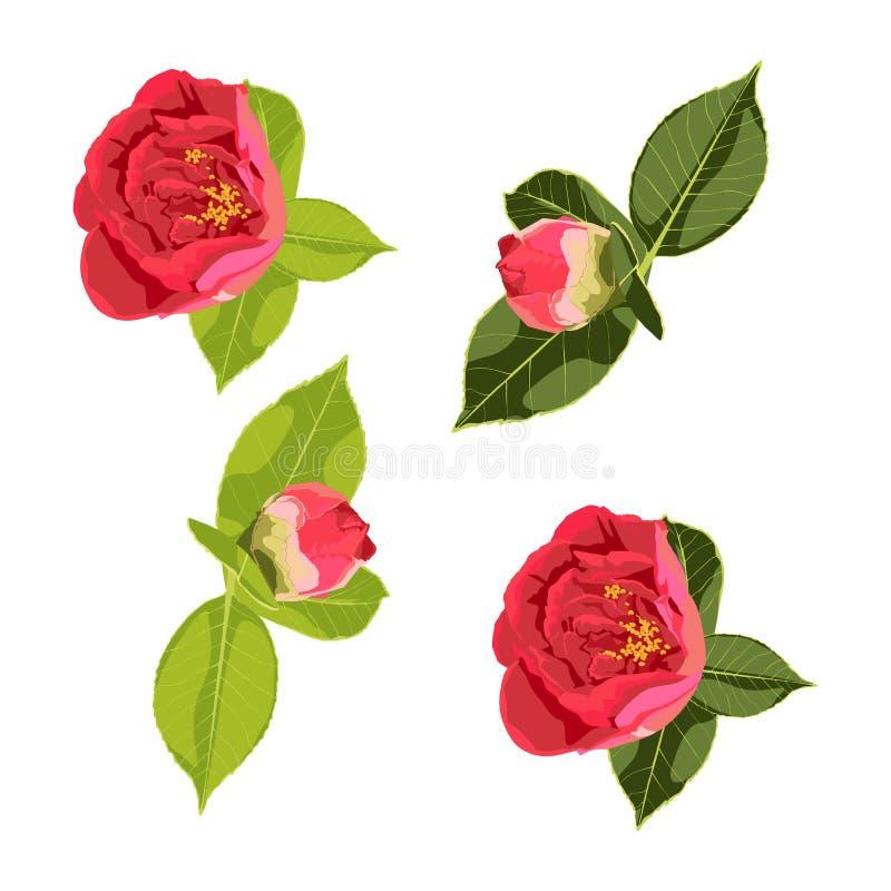 Blumen entwerfen Satz mit Pfingstrosenblumenpaaren der grünen Blätter und der roten Rosen stock abbildung