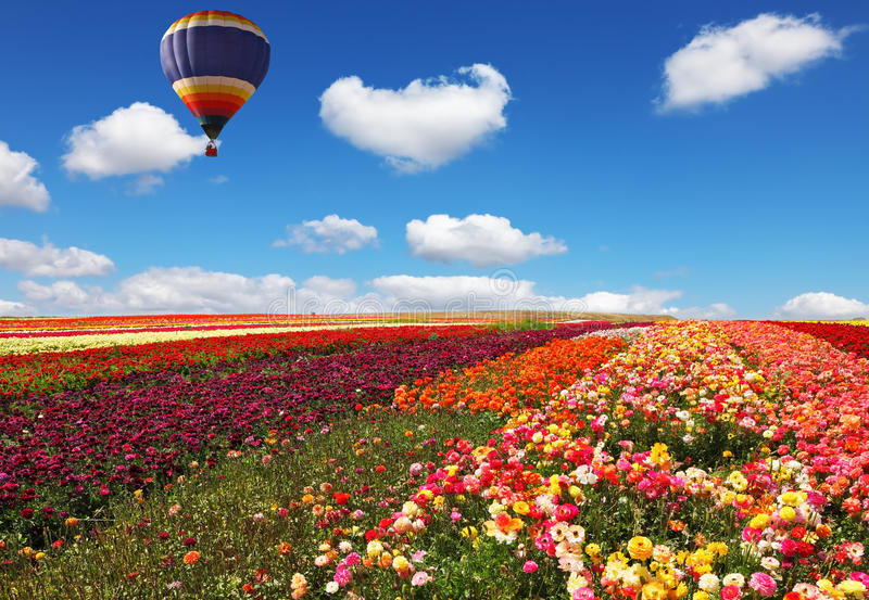 Blumen für den Export gewachsen lizenzfreies stockbild