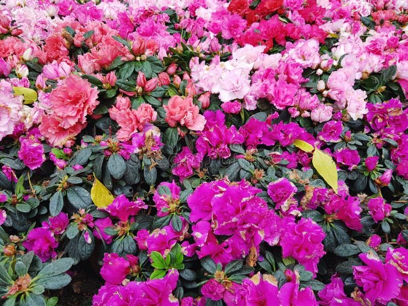 Blumen-Festival lizenzfreies stockbild
