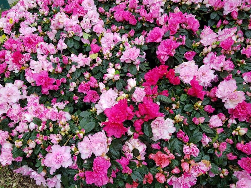 Blumen-Festival stockbild