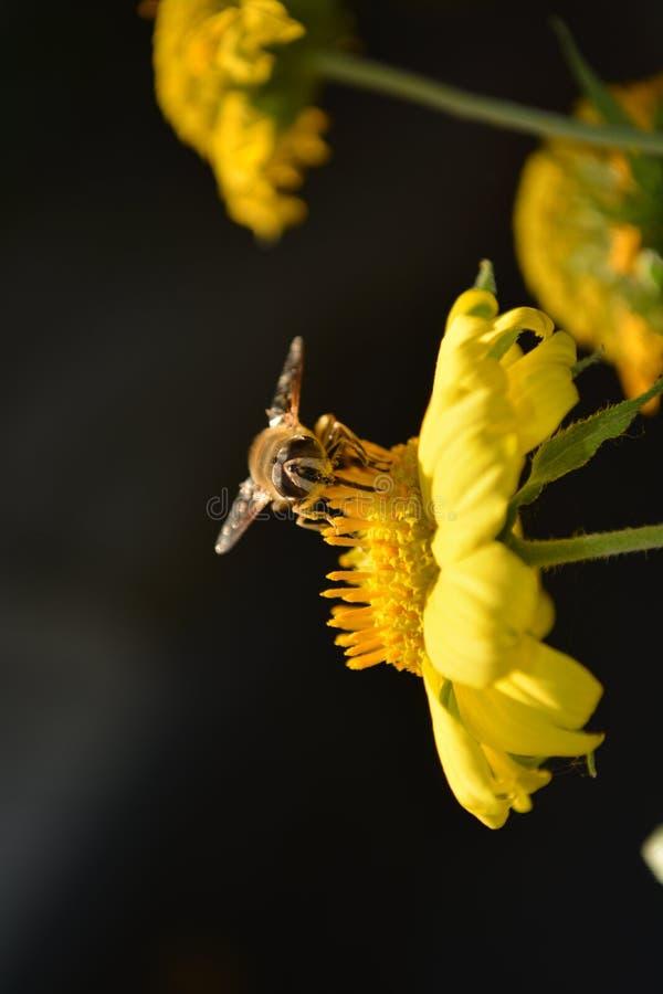 Blumen fliegen stockfotografie