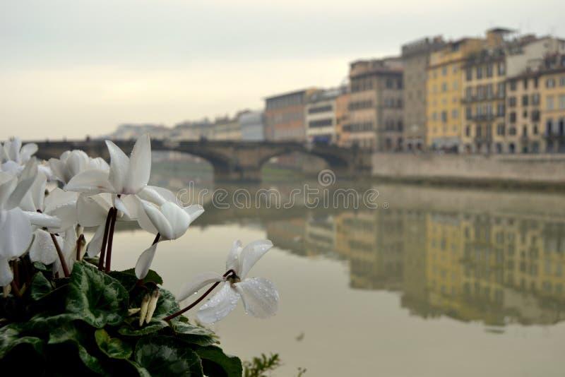 Blumen in Florenz, Italien stockbild