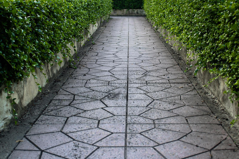 Blumen-Gartengehweg stockbilder
