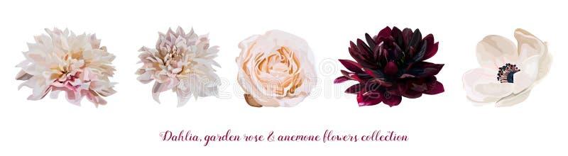 Blumen-Gartenrosa Rose, verschiedene Blumen natürlicher Pfirsich, rote hellrosa Elemente Dahlia Anemone-Designers Burgunders in A lizenzfreie abbildung