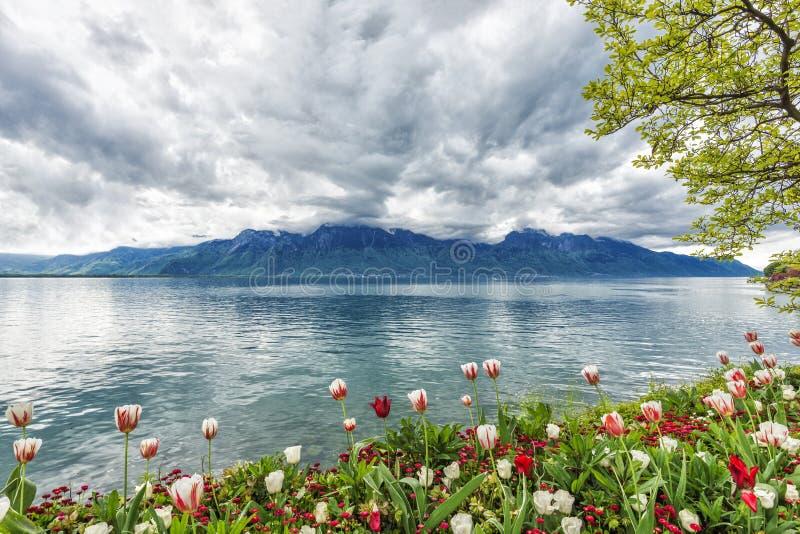 Blumen gegen Berge, Montreux. Die Schweiz stockfotografie