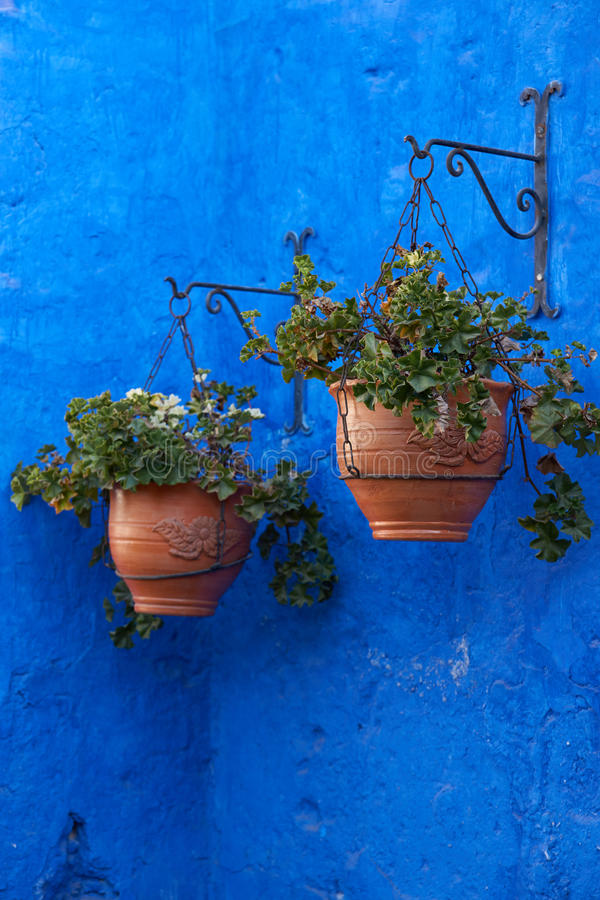 Blumen gegen blaue Wand stockfoto