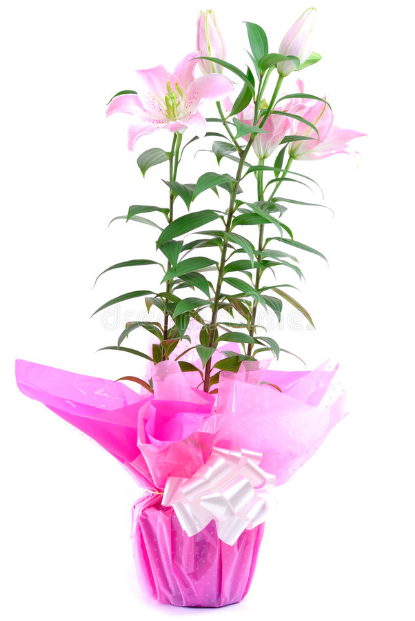 Blumen-Geschenk stockfotos