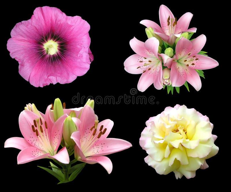 Blumen getrennt auf Schwarzem. stock abbildung