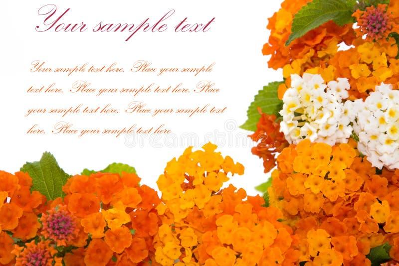 Blumen getrennt auf Weiß lizenzfreie stockfotos