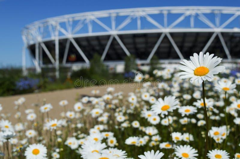 Blumen, Gras, Himmel und Stadion stockfotos