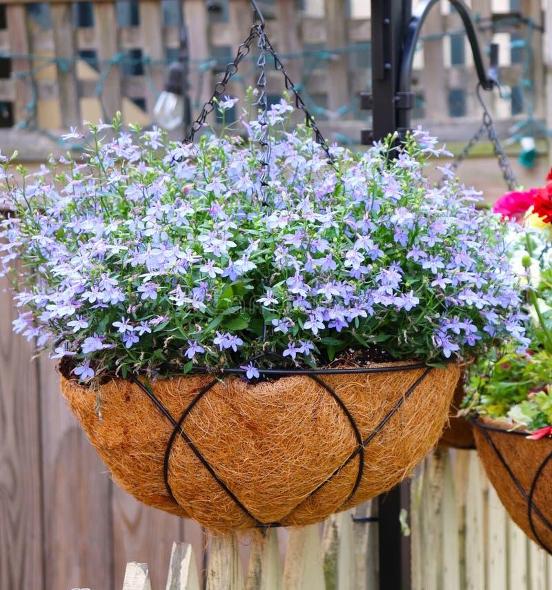 Blumen in h?ngenden T?pfen stockbilder