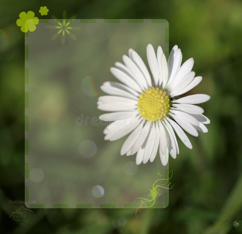 Blumen-Hintergrund-Schablone stockfotografie